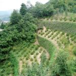 Ecological Retaining Wall - Green Terramesh
